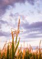 Akustikbild by Motty Henoch - In the field #1