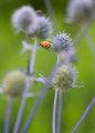 Akustikbild by Motty Henoch - In the field #7